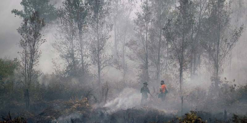 Indonesia haze in forest. Indonesia. September 2015. Photo Credit: ©Bagus Indahono/Corbis